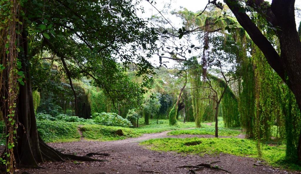 Park Almendares