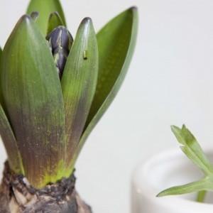 DIY: Haal het voorjaar in huis